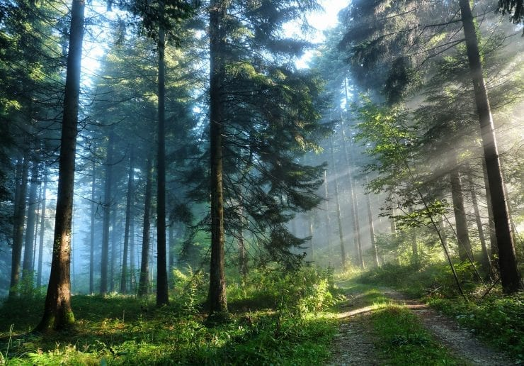 Sun-rays-in-forest